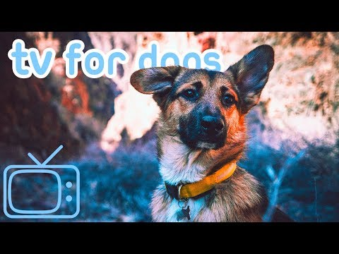 Tv for Dogs! Nature and Dog TV to Chill Your Dog! NEW 2019!