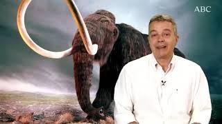 Materia Oscura ABC: Resucitar un mamut