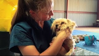 RSPCA Short Tails: RSPCA NSW Community Outreach Programs