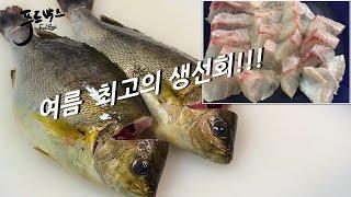 여름에 꼭 먹어야 할 생선회 ~ 무조건 먹어봐야 합니다 !!!
