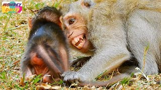 OMG! Dutches scream loudly seem scare her newborn   Why Dutches do like this?   Monkey Daily 2430