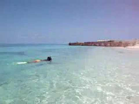 Dia de snorkeling en Fort jefferson