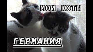 ❤ Я СУМАСШЕДШАЯ кошатница ❤ КОТЫ из московского ПРИЮТА
