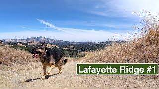 Lafayette Ridge Trail Hiking with German Shepherd Series Part 1 of 4 Hiking with Dog