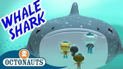 Octonauts - The Whale Shark | Series 1 | Full Episode | Cartoons for Kids