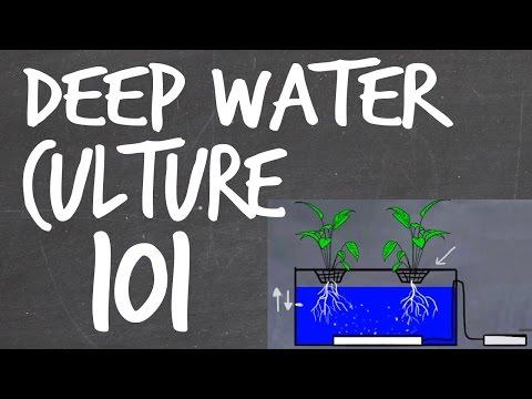 Deep Water Culture (DWC) Hydroponics System Tutorial