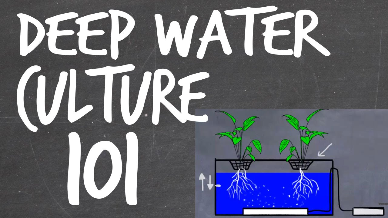 Deep Water Culture Dwc Hydroponics System Tutorial Youtube