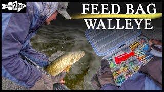 How to Catch Fall Walleye Using Reaction Jigs