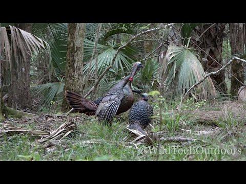 Osceola Turkey Bow Kill! Gobbler Smashes Jake Decoy!!!