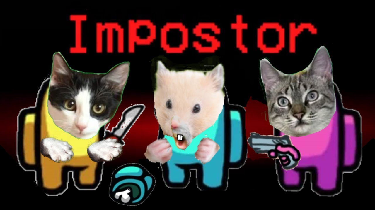 Laberinto de AMONG US para gatos Luna y Estrella y el hamster 2 Primera vez / Videos de gatitos