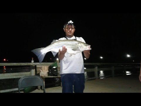 CRAZY ACTION AT MATAPEAKE!! ANOTHER BIG STRIPED BASS!