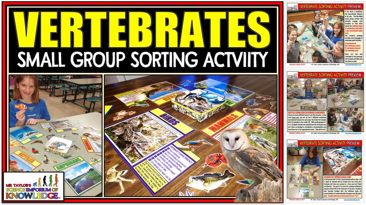 Animal Classification: Vertebrate Sorting Activity | Teaching Resources