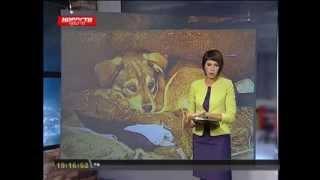 Красноярск. Неизвестные пытались отравить всех бродячих собак в районе(, 2013-11-07T02:17:14.000Z)