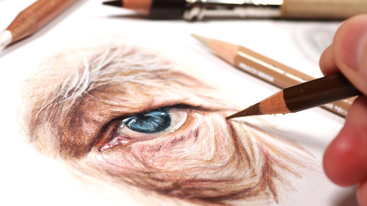 Image of: Spray Paint Biggest Tips For Drawing Old People In Colored Pencil Kirsty Partridge Art Youtube Biggest Tips For Drawing Old People In Colored Pencil Youtube