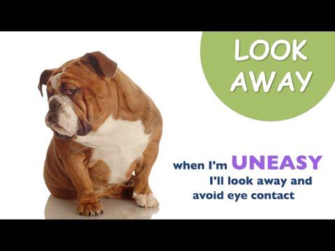 Dog Communication: Dog Body Language