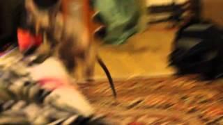 Самая умная лысая кошка