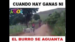 CUANDO EL BURRO TIENE GANAS