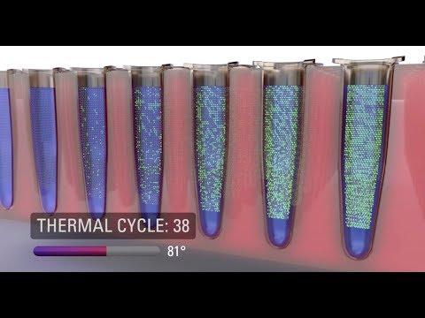 DNA PCR technology: ddPCR - Digital Droplet PCR in Africa, KRISP,  Durban, South Africa