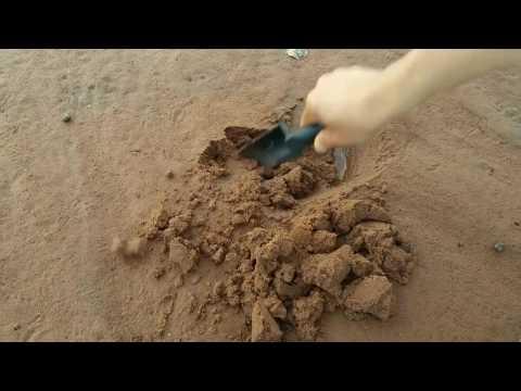 자연산 골뱅이 잘 잡는 방법 모래 속에 숨어�