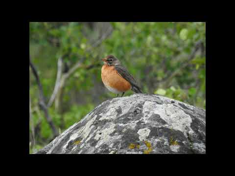 Greater Yellowstone Wildlife