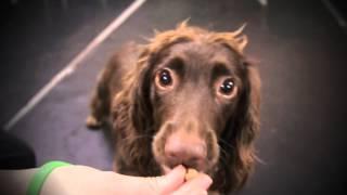 Oakwood Dog Training Centre