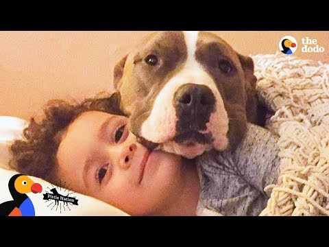 Pit Bull Dog Takes The Best Care Of Her Human Brother | The Dodo Pittie Nation