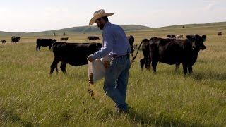 Cattle Range Cube Feeders Buyerpricer Com
