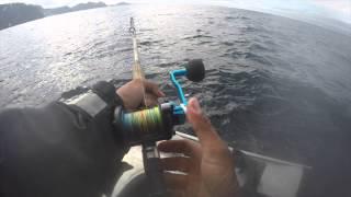 Huge Halibut strike underwater