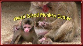 Baby monkeys 淡路島モンキーセンターの赤ちゃん猿