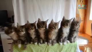 Что делают коты утром