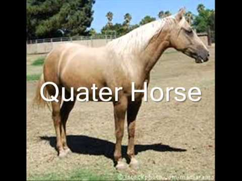 Z pictures a breeds horse with