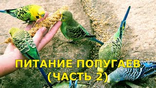 Питание попугаев - часть 2