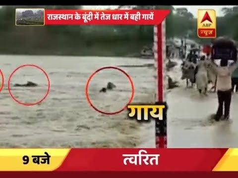 Rajasthan: 5 cows get drown in water, no body comes out to rescue in Bundi