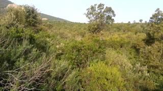 NUOVO VIDEO #CACCIA GROSSA IN SARDEGNA #ZAC SA SPENDULA