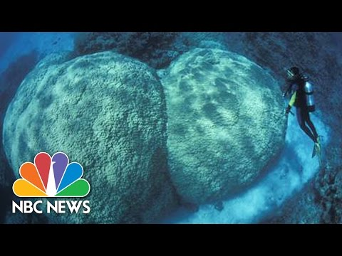 Scientists Blame Warming Ocean For Massive Coral Die-Off Of Great Barrier Reef | NBC News