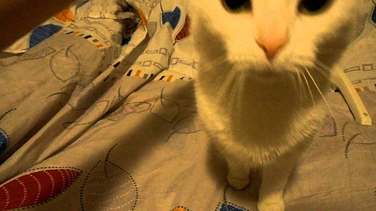 Chlpaté mačička čistá