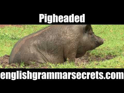 Pigheaded idiom, expression, meaning - an Animal Idiom in everyday use