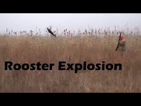 Kansas Rooster Explosion