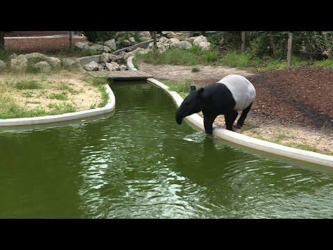 Les animaux du jardin des plantes face la canicule youtube - Animaux du jardin des plantes ...