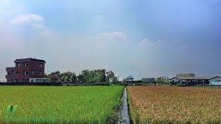 Jak velké riziko přináší arsen obsažený v rýži?
