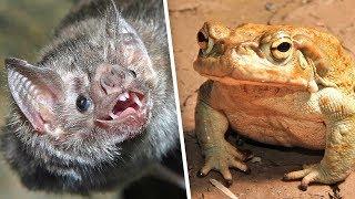5 отвратительных блюд из ЖИВЫХ животных | Их едят ЖИВЬЕМ