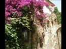 Vacation Rental House In Italy Liguria Bed And Breakfast San Remo Imperia Bordighera Riviera