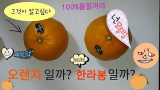 오렌지일까 한라봉일까? 그것이 알고싶다! 100%틀림 보장