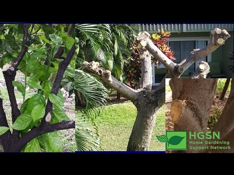 Smart Pruning Strategies For the Home Landscape