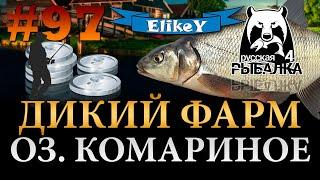 Где заработать новичку Трофейный Лещ Легкий Фарм Оз Комариное Русская Рыбалка 4 97