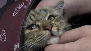 В Челябинске кошка прожила в вентиляционной шахте почти две недели