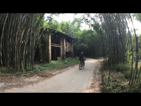 A thick bamboo forest to explore in China