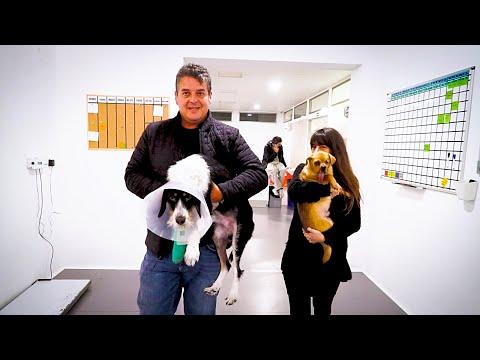 Dos perros sin esperanza reciben la visita de la chica que les rescató