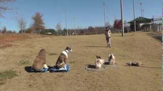 Dog Training: All Dogs Can Learn