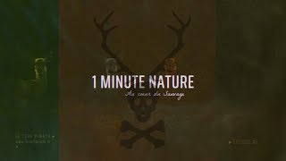 Le Cerf Pirate - 1 MINUTE NATURE - EP 02